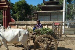 Bagan-702
