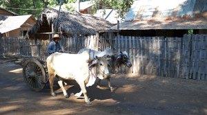 Bagan-745